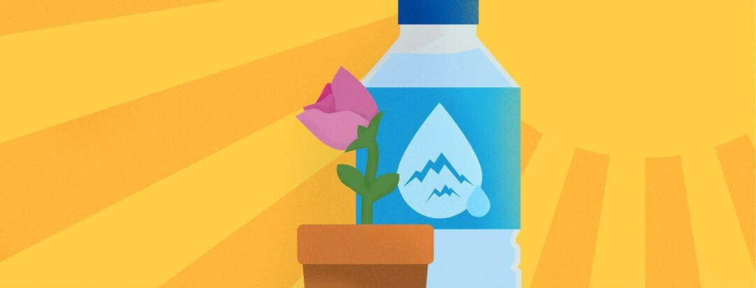 A hot sun shining and a flower growing in the shade of a water bottle