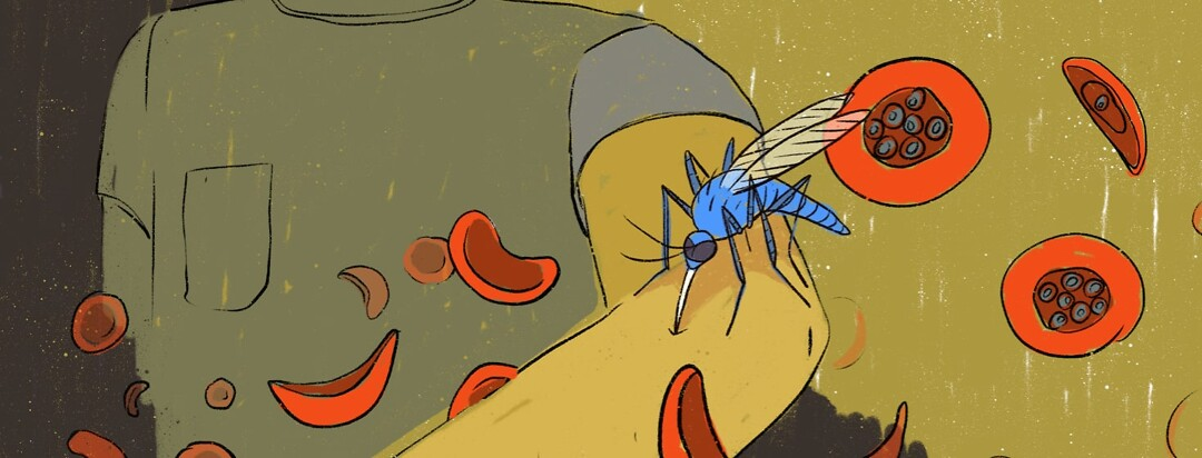Mosquito stinging a person with blood cells surrounding